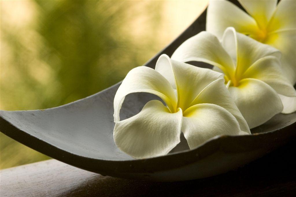 Kết quả hình ảnh cho zen flowers