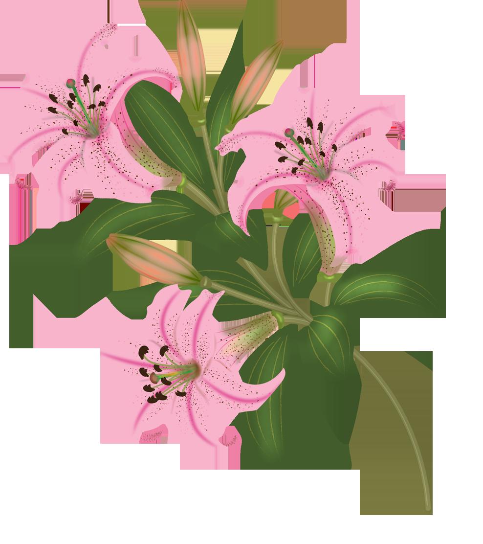 flowers vector Laminas para sublimacion, Imágenes de