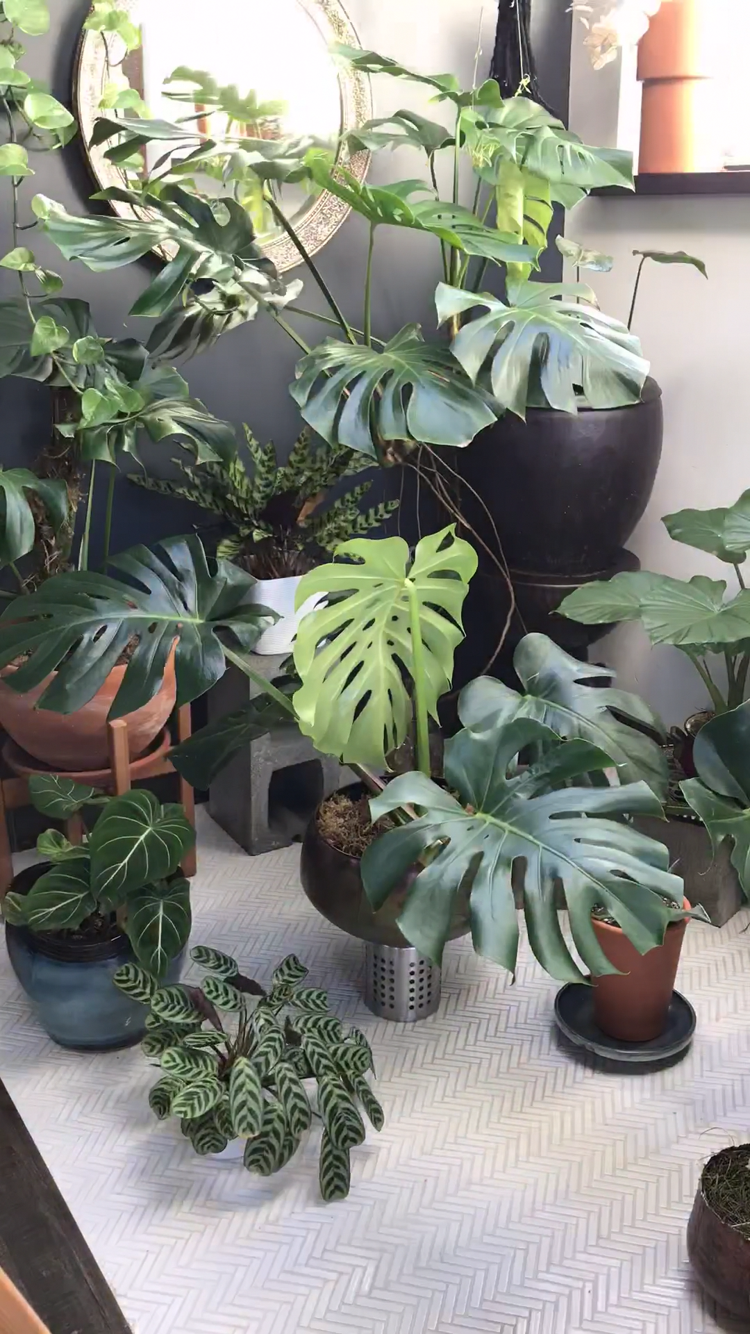 What's the best way to care for a monstera plant? I'm glad you asked! On the blog, I teach you how to grow, care for and propagate your monstera plant so keep reading.   Love this video time-lapse of my houseplants? I've got more for you! Keep reading!