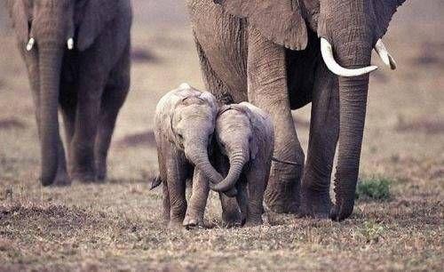 動物の親子画像を貼って自分が癒されるだけのスレ