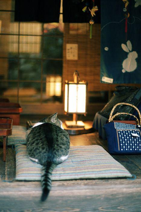 Cats おしゃれまとめの人気アイデア Pinterest Fumiko Katagiri 子猫 猫 にゃんこ