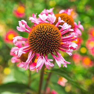 Game-Changing Flower Varieties | Hardy perennials, Plants ...