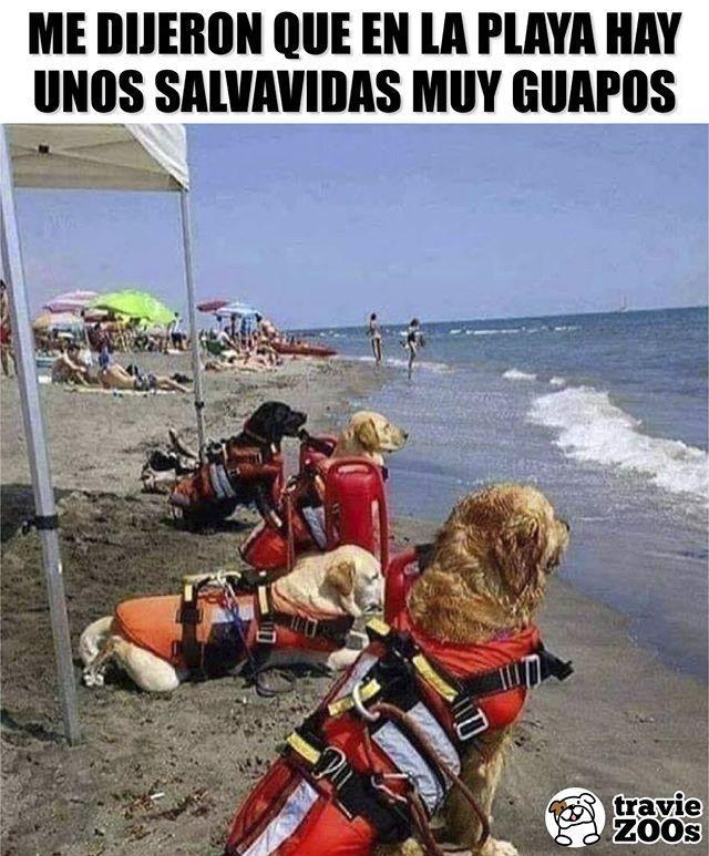 Y Tenian Razon Dogs Perros Salvavidas Playa Mar Perros Graciosos Memes Perros Perros Bonitos