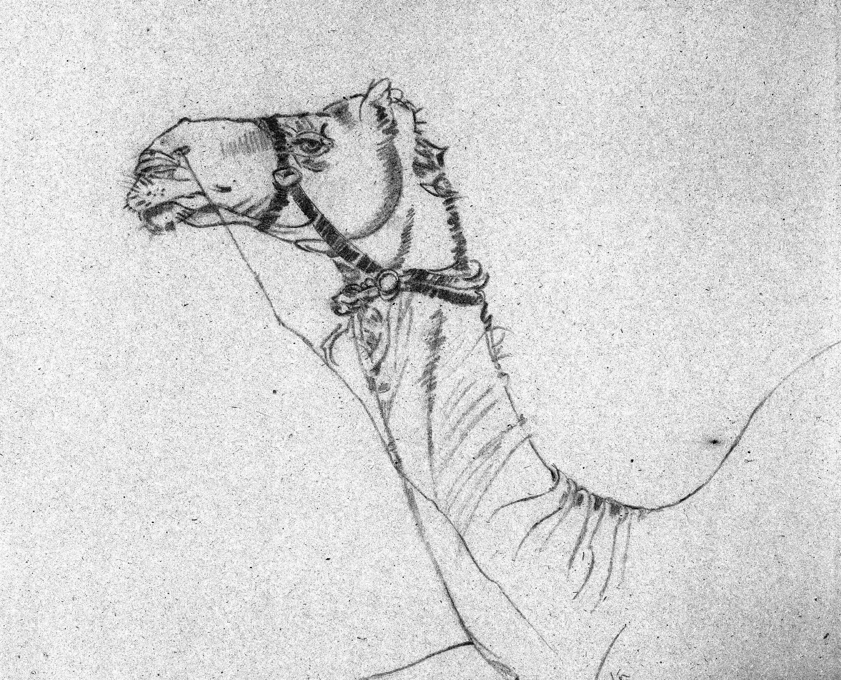 pencil sketch of camel on location of jaipur rajasthan india
