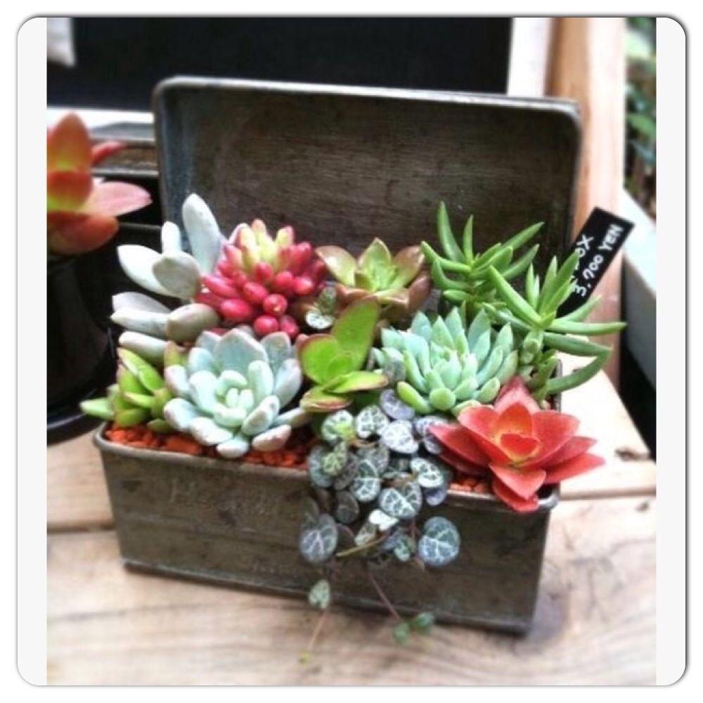 Treasure suculentas pinterest plants gardens and container