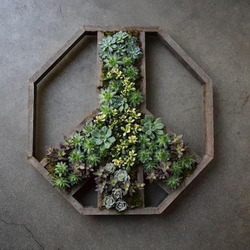 Succulent Wall Planter Vertical Gardening