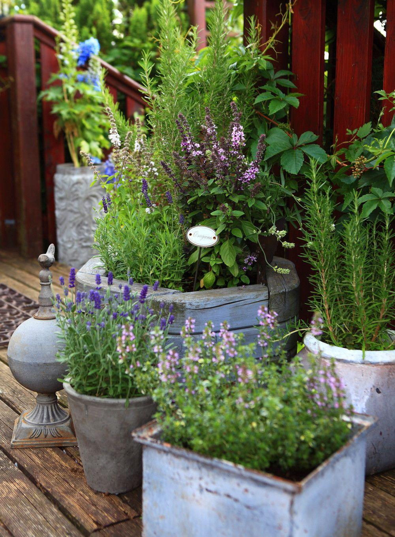 Ziola W Donicach Na Tarasach I Balkonach Container Gardening Garden Pots Hydroponic Gardening