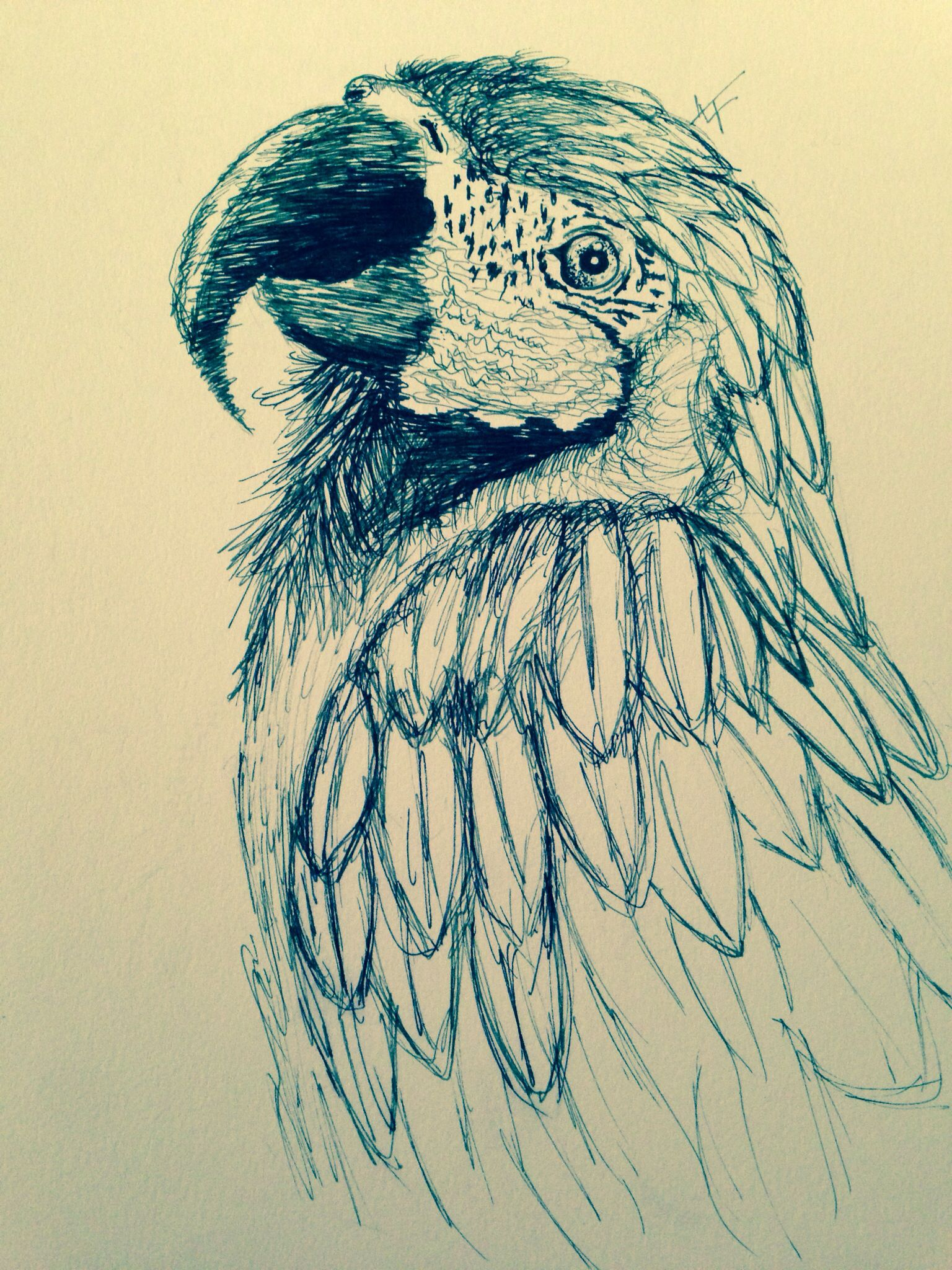 Parrot drawing LT art Parrot