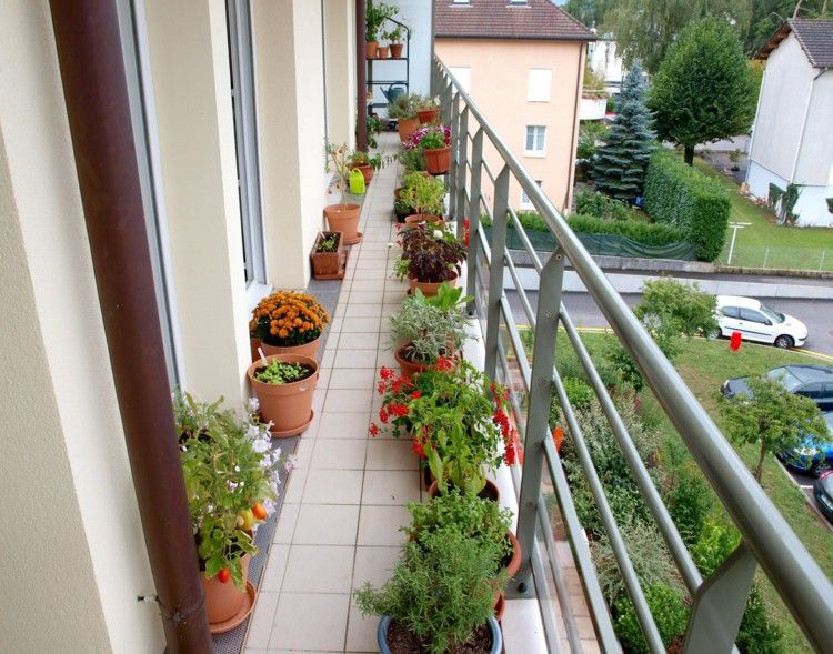 Balcony Plants Sunny Small Design And Decorating
