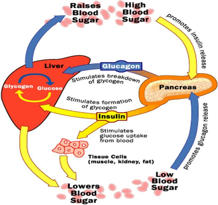 Regulation Of Blood Sugar By Pancreatic Hormones Insulin And