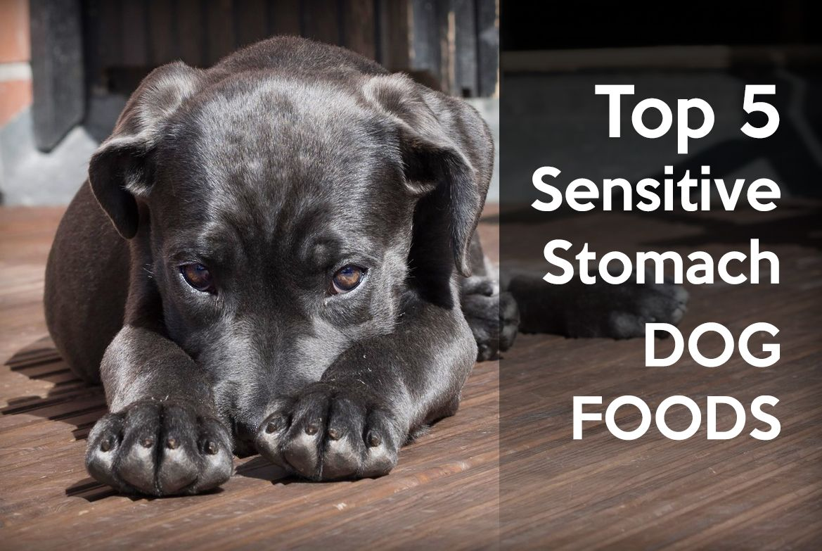 Discover 5 sensitive stomach foods help your pup feel