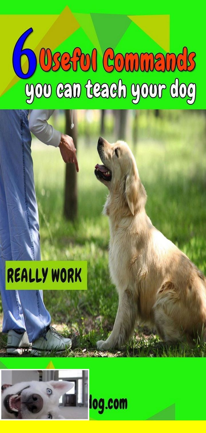 Puppy Training Guidelines Dogtraining And Dog Whisperer Training