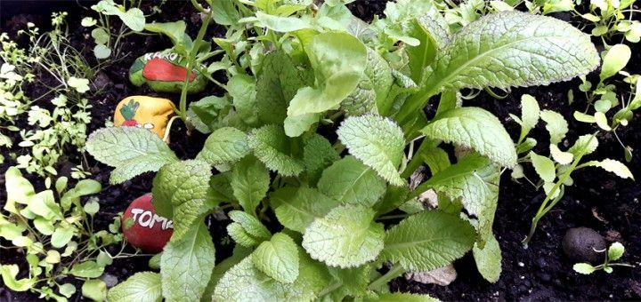 Der milde Winter macht es möglich: Mein Kräutergarten im Hochbeet auf dem Balkon ist richtig schön üppig – Petersilie, Rukola, Schnittlauch, Spinat und Asia-Salat wachsen prächtig!