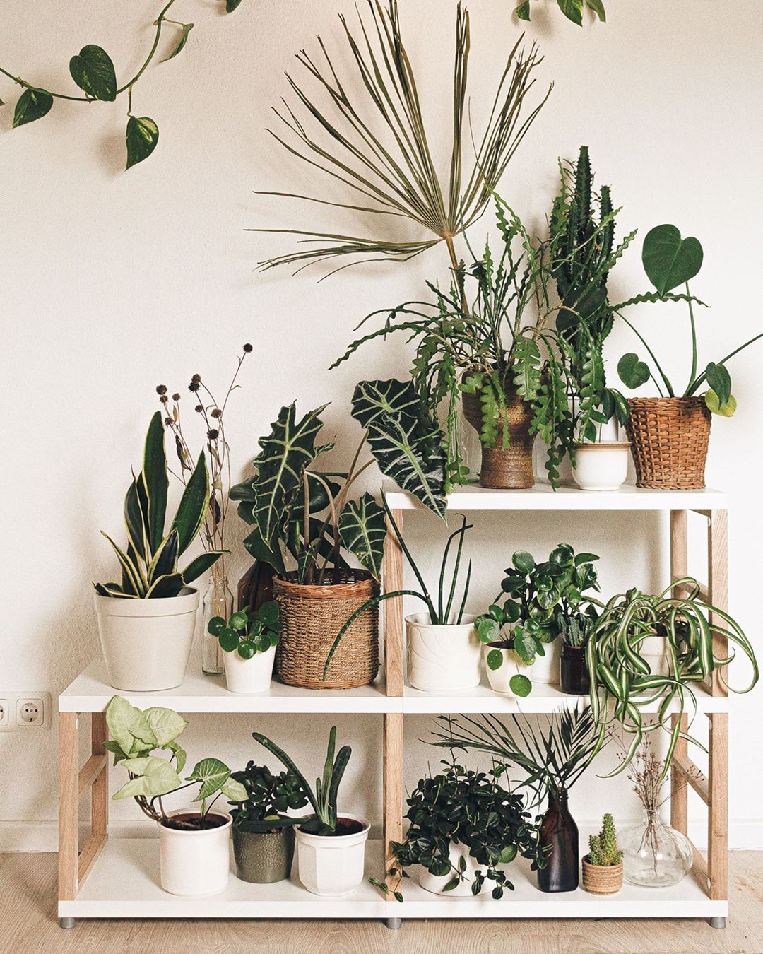 MAXX Pflanzenregal in 7  Interior plants, Plants, House plants