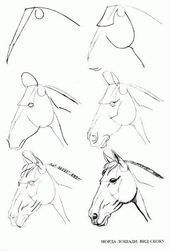 Learn to draw step by step: animal - horse head (side view) - #animal #Zei ... -  - #Animal #draw #Horse #Learn #side #step #view #Zei