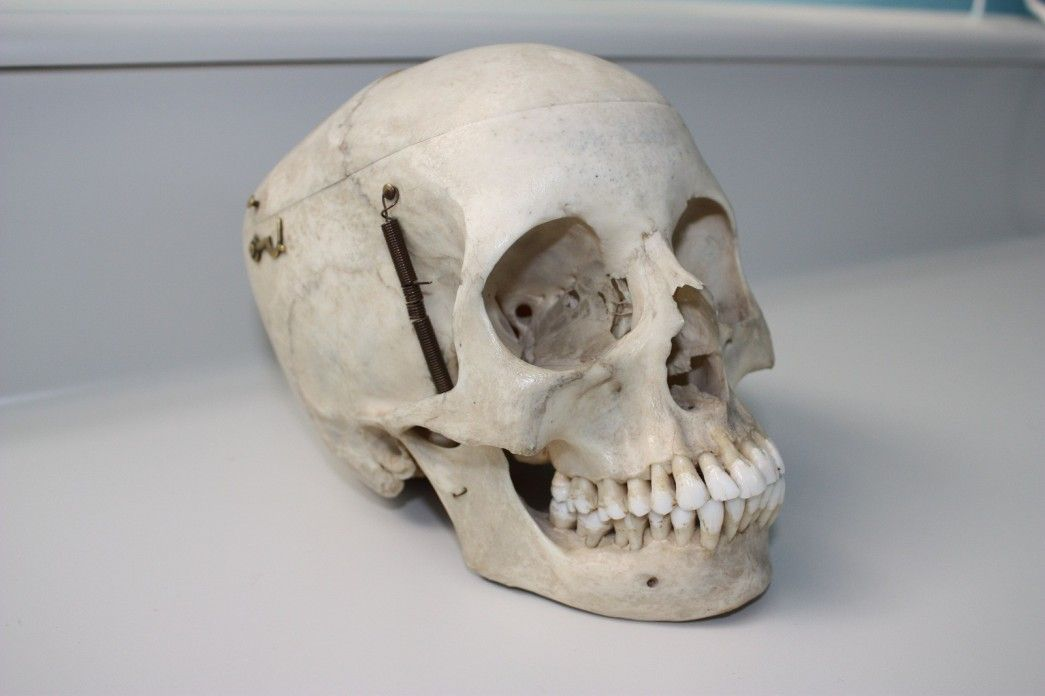 Alien Microchip Found Inside Napoleon's Skull