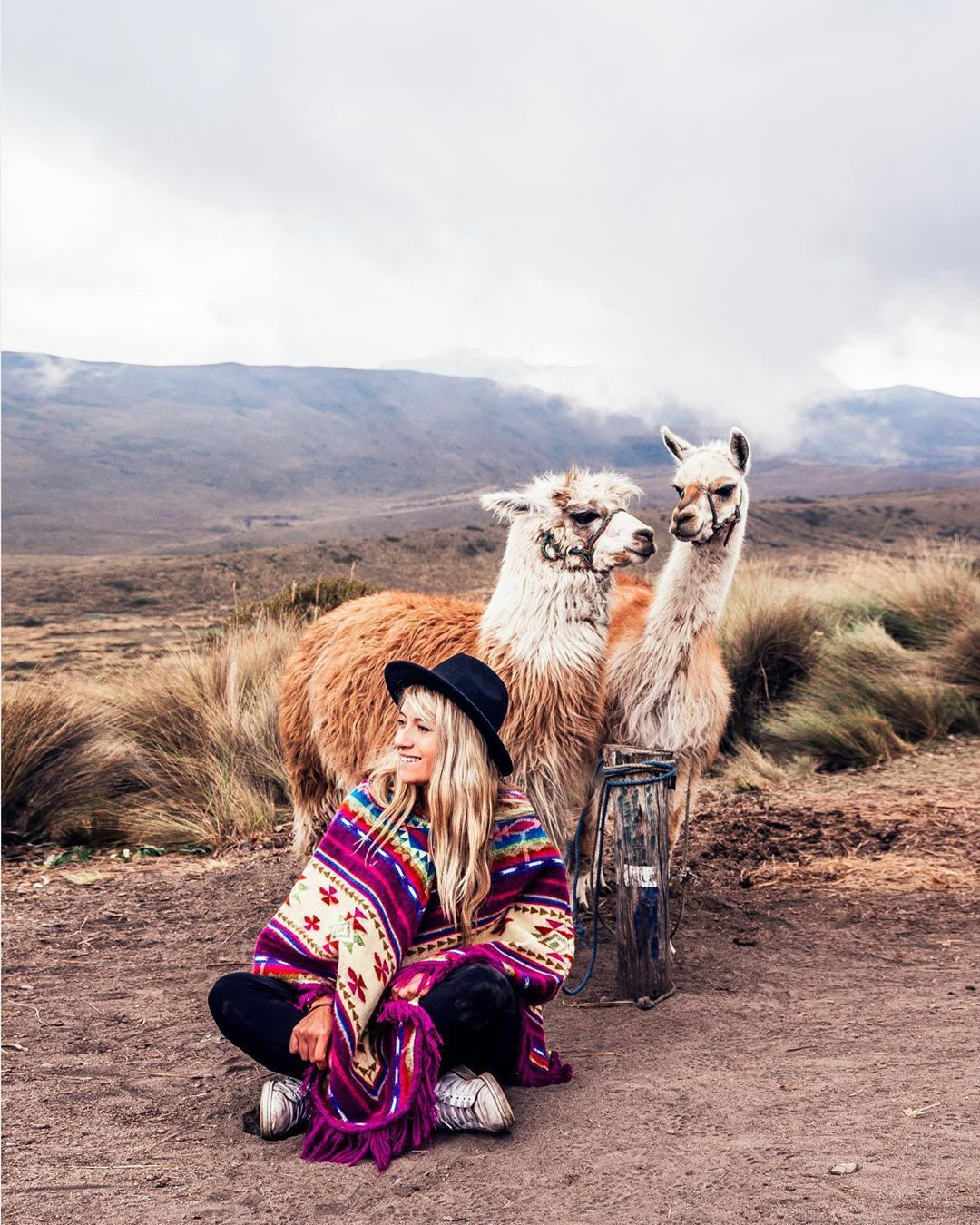 When I (Marco) was traveling around Latin America back in 2011 I had this idea/dream to adopt a Llama/Alpaca and take... #latinamericatravel
