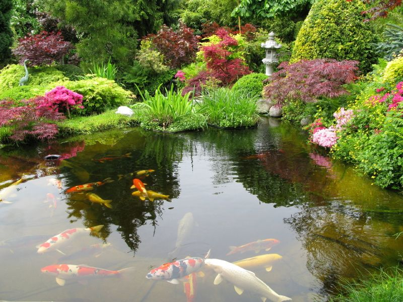 An enormous water feature in a japanese garden filled with for Japanese koi pond garden