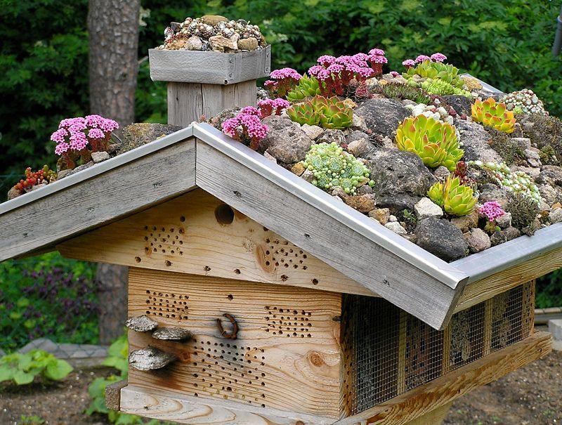 sempervivum und sedum auf dem wildbienenhaus garten pinterest garten garten ideen und. Black Bedroom Furniture Sets. Home Design Ideas