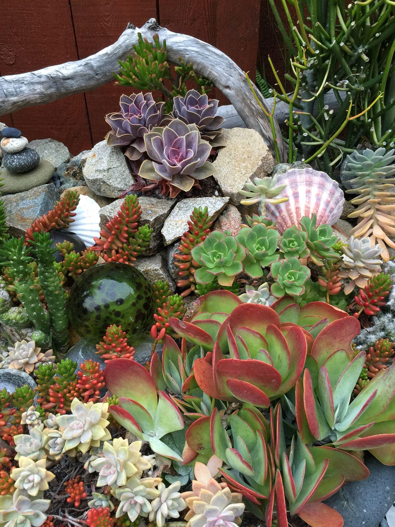 Ocean Theme Landscaping Succulent Landscaping Succulent Landscape Design Succulent Garden Design