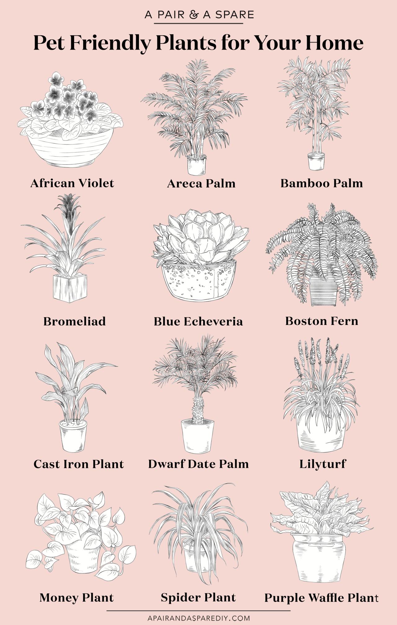 The Best Pet Friendly Plants For Your Home Plants Bathroom