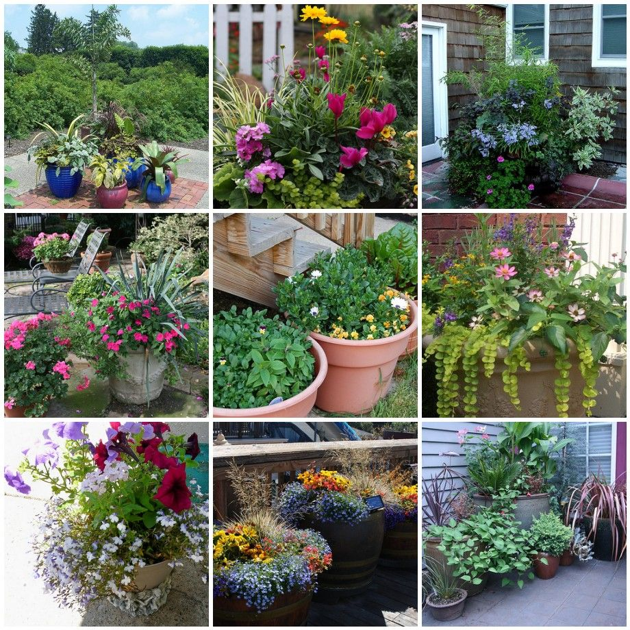 66 things you can grow at home in containers without a garden
