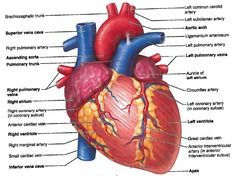 Delightful Heart   Exterior