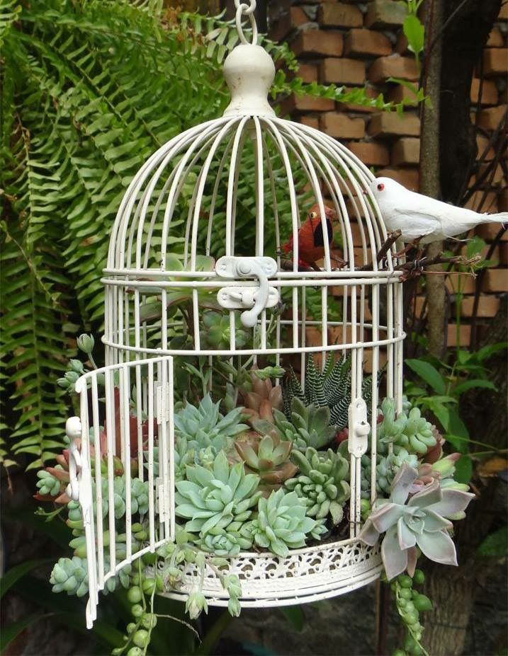 cage oiseaux contenant des plantes grasses jardins pinterest plantes grasses plantes. Black Bedroom Furniture Sets. Home Design Ideas