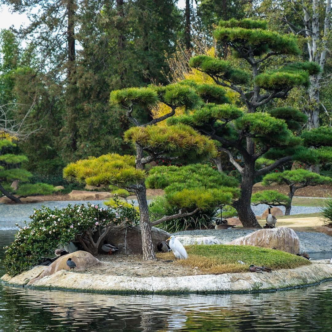 Lone White Bird Japanese #tree #zen #zengarden #garden #pond #adventure