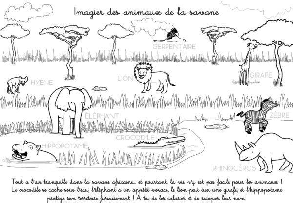 Coloriage imprimer imagier des animaux de la savane coloriages d 39 animaux pinterest - Felin de la savane ...