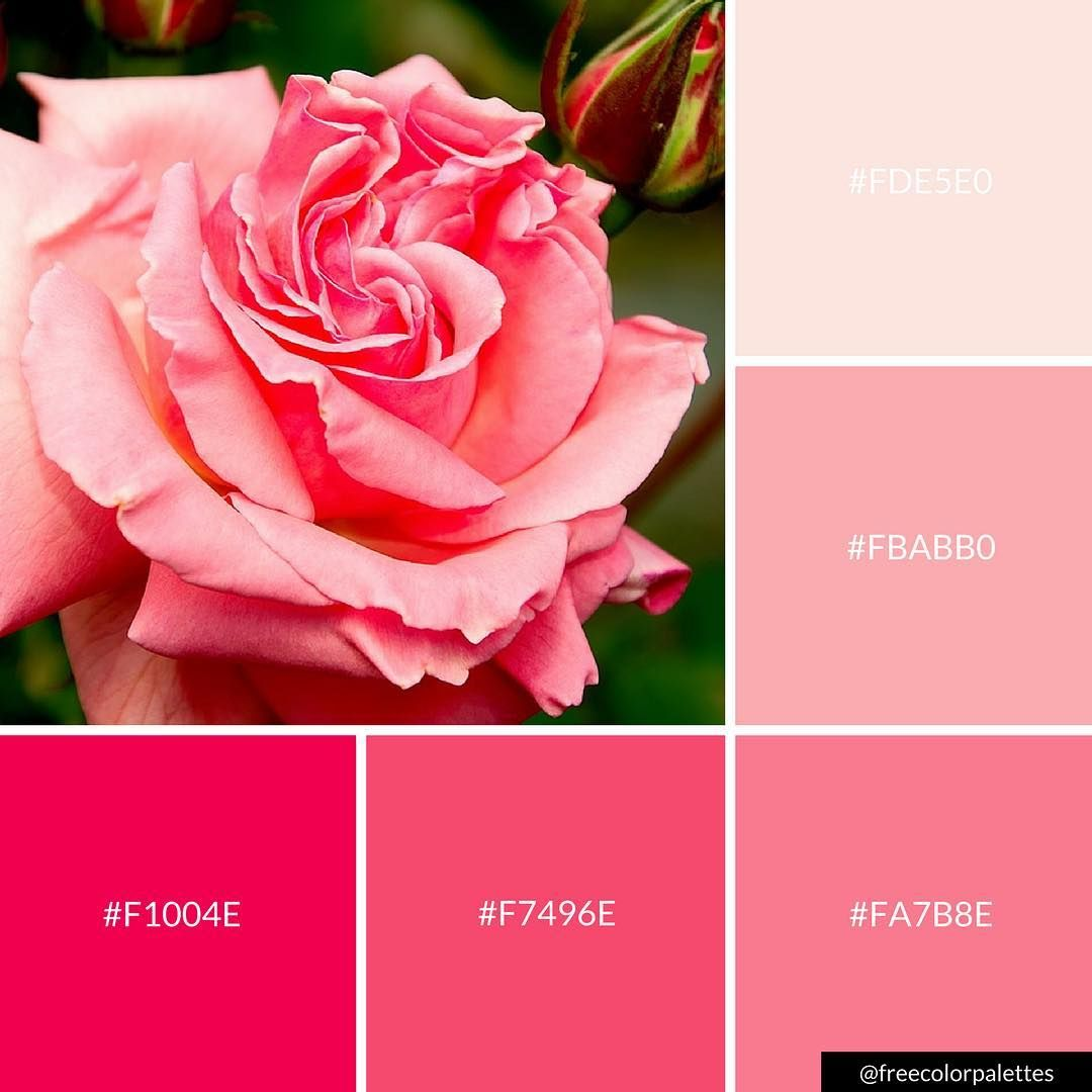 Pink Rose Flower Springtime Color Palette Inspiration Digital Art Palette And Brand Color Palette Color Palette Pink Color Swatch Pink Color Palette