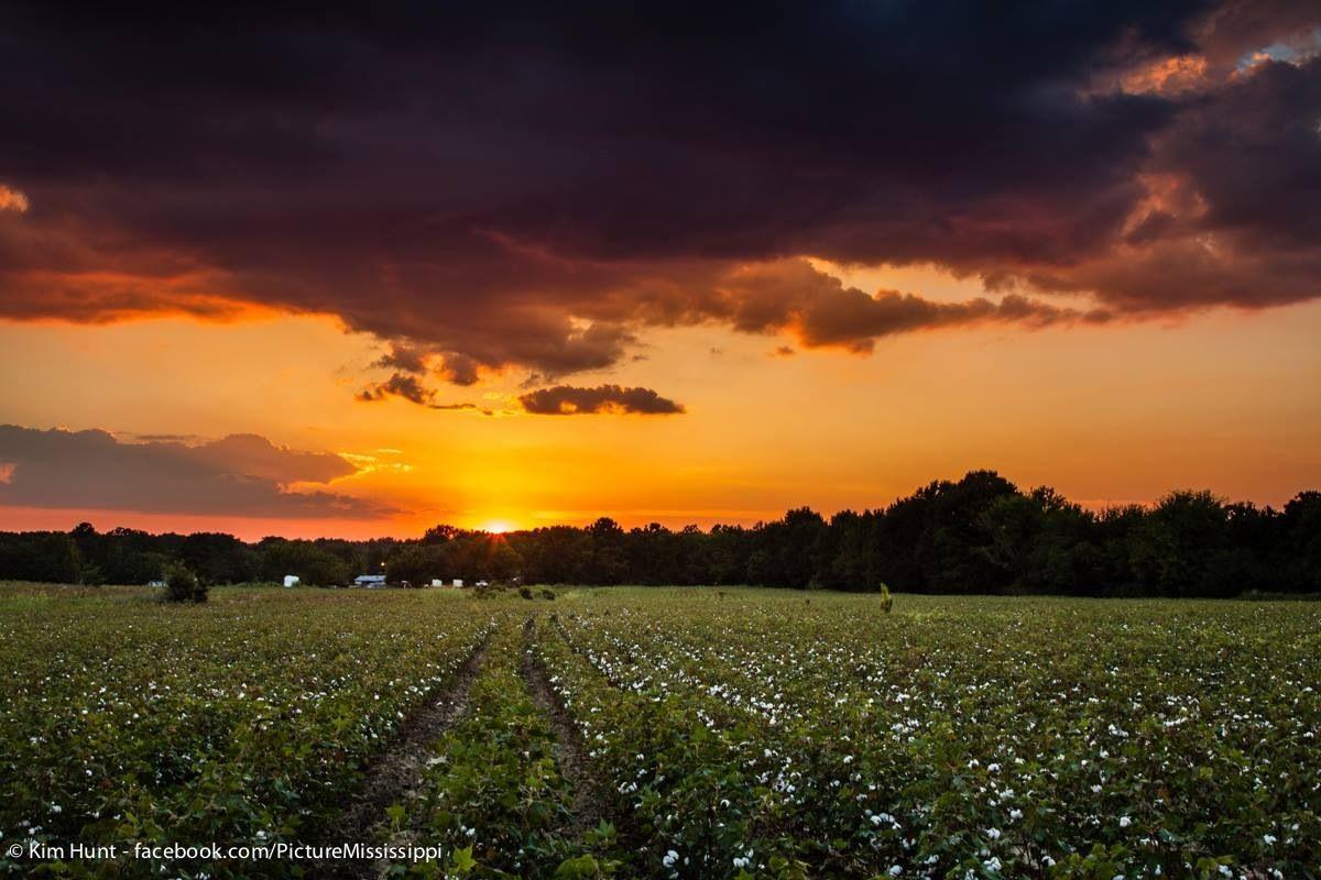 Sunset in the Mississippi Delta Mississippi delta