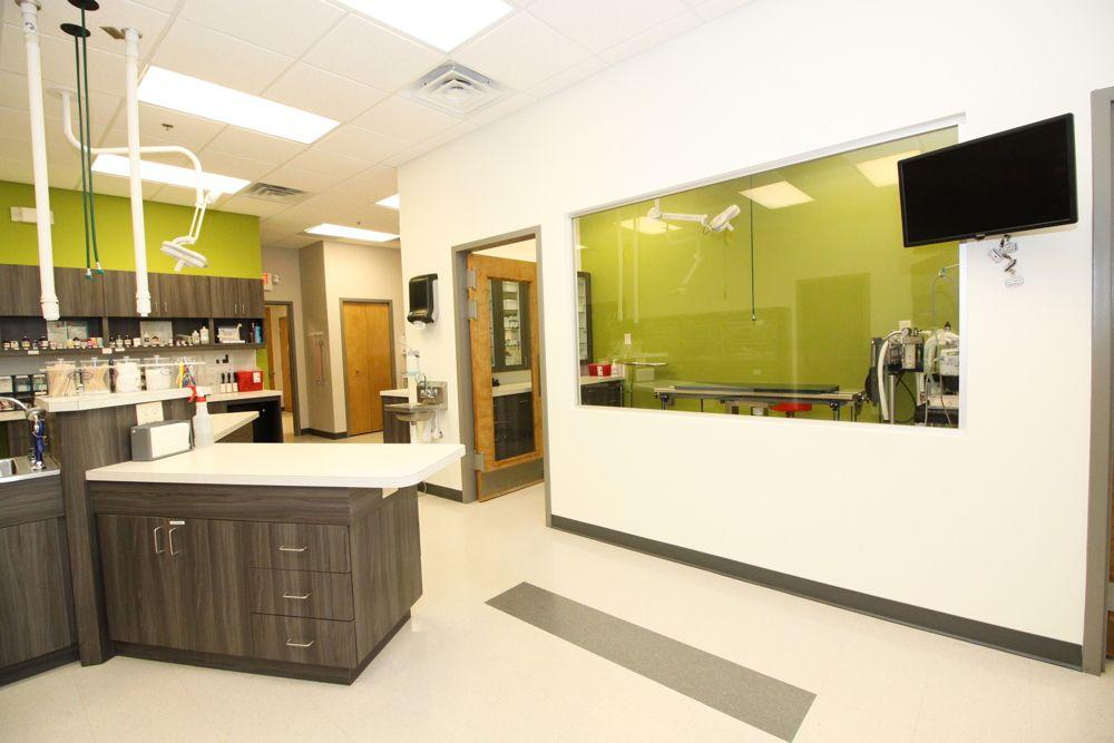 10++ Arizona animal wellness center ideas in 2021