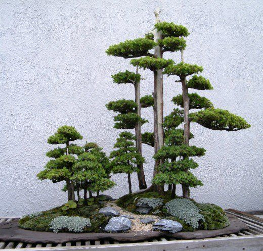 How to Take Care of a Bonsai Tree #bonsaiplants