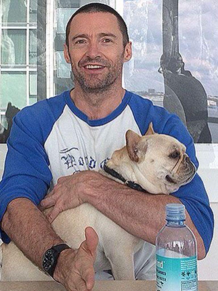 French Bulldog Puppies New York French Bulldog Puppies Bulldog Puppies Cute Animals