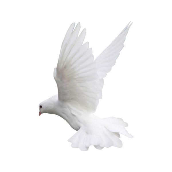 100 Png Dove Pictures Bird Birds