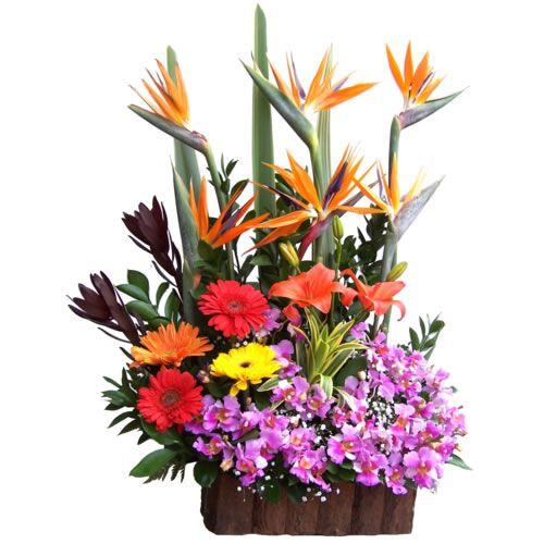 arreglos de flores exoticas grandes , Pesquisa Google