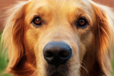 Pin On Blogs For Dogs And Cats Too