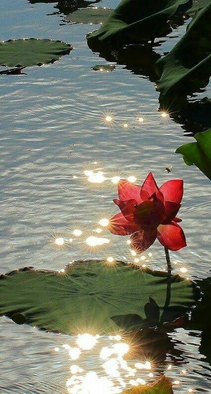 Bacrote Zenitude Pinterest Flowers Nature Et Beautiful