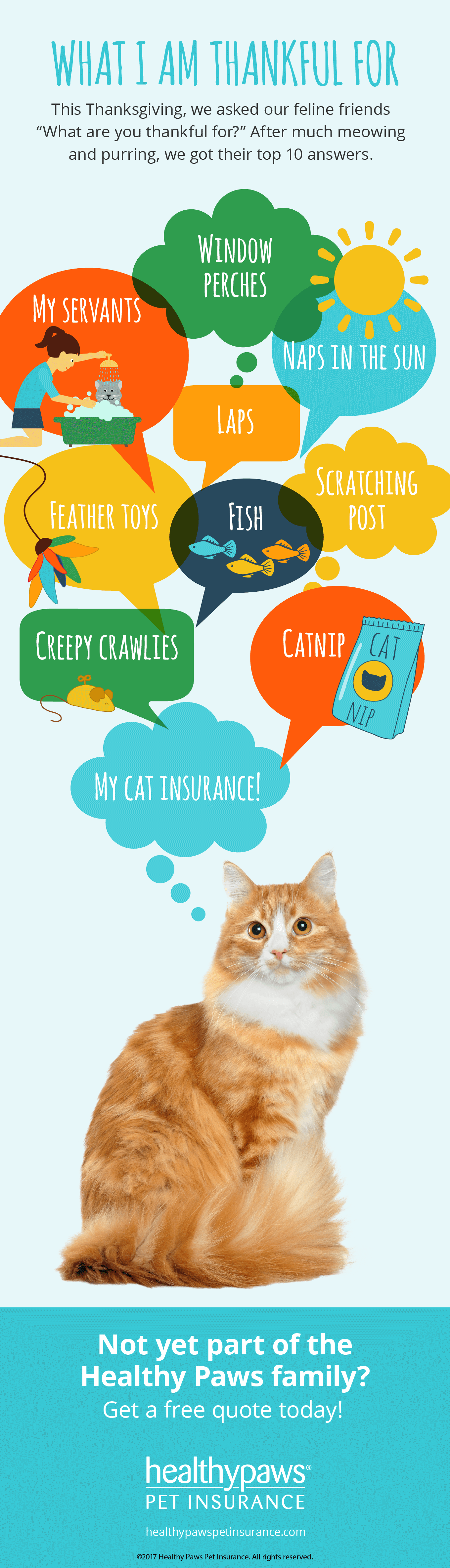 What Is Your Cat Thankful For This Holiday Season Pet Insurance For Dogs Cat Safe Plants Cat Insurance
