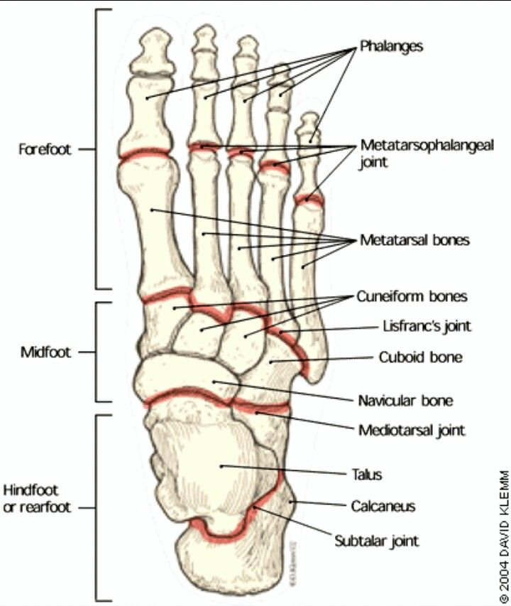 The foot! | physical therapy notes | Pinterest