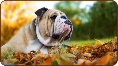 Go Cold Turkey - Data from Petplan #pet-insurance shows a 78% increase in pancreatitis and a 27% rise in gastroenteritis claims over Thanksgiving weekend, largely due to feeding pets rich, fatty foods like turkey skin and gravy.     Find more fall and holiday pet health tips in the November fetch! health newsletter - just click the pic to read! #pet #health