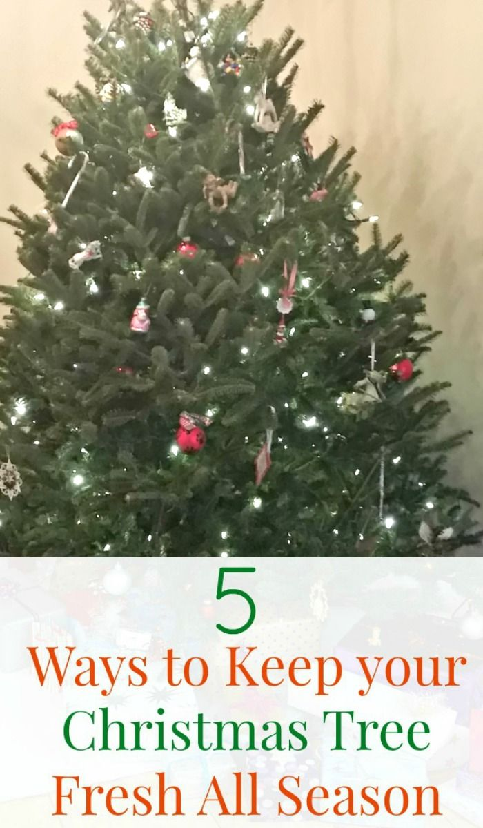 5 Ways to Keep your Christmas Tree Fresh All Season | Christmas tree