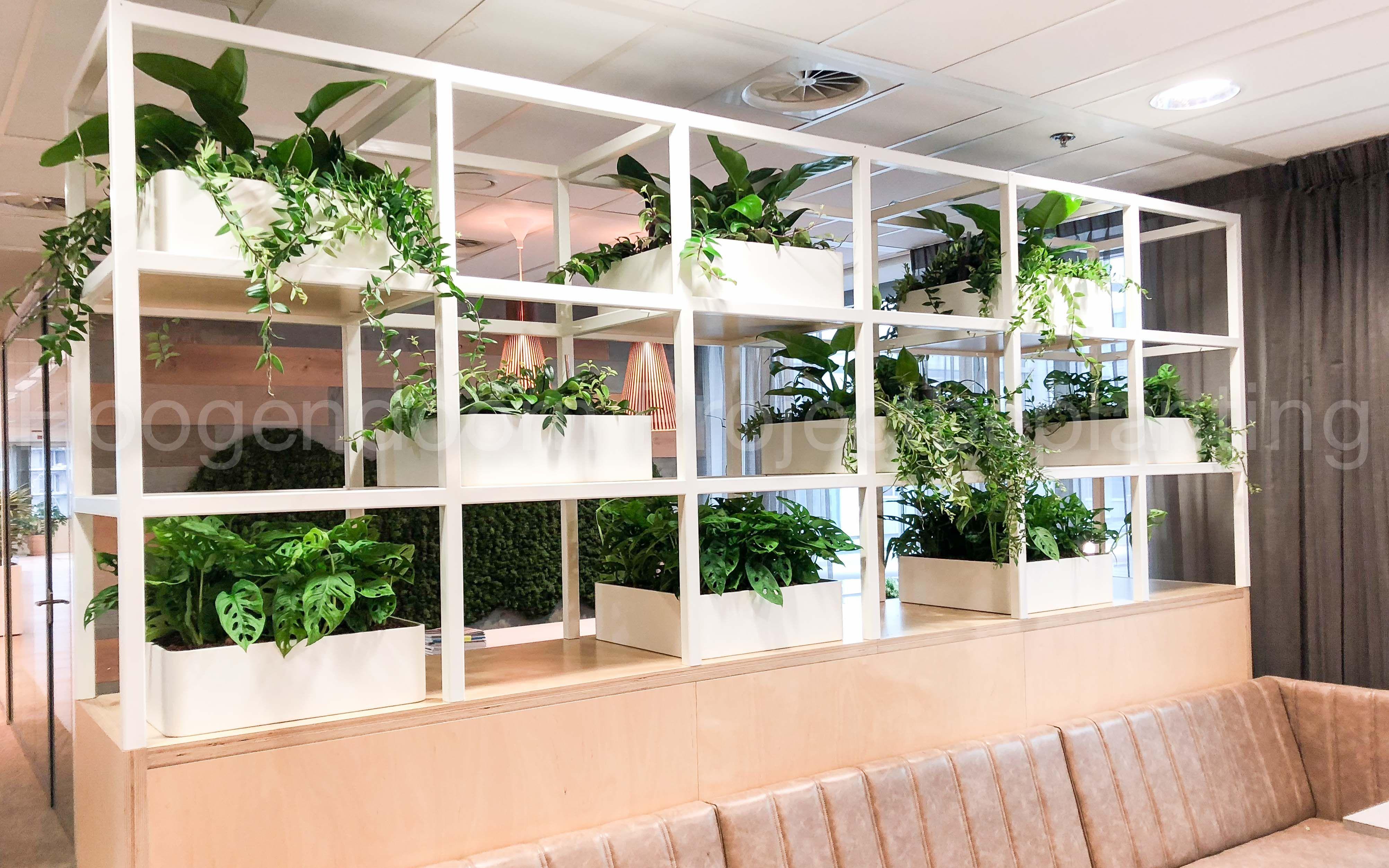 Planten Op Kantoor : Hangplanten hydrocultuur interieurbeplanting onderhoud