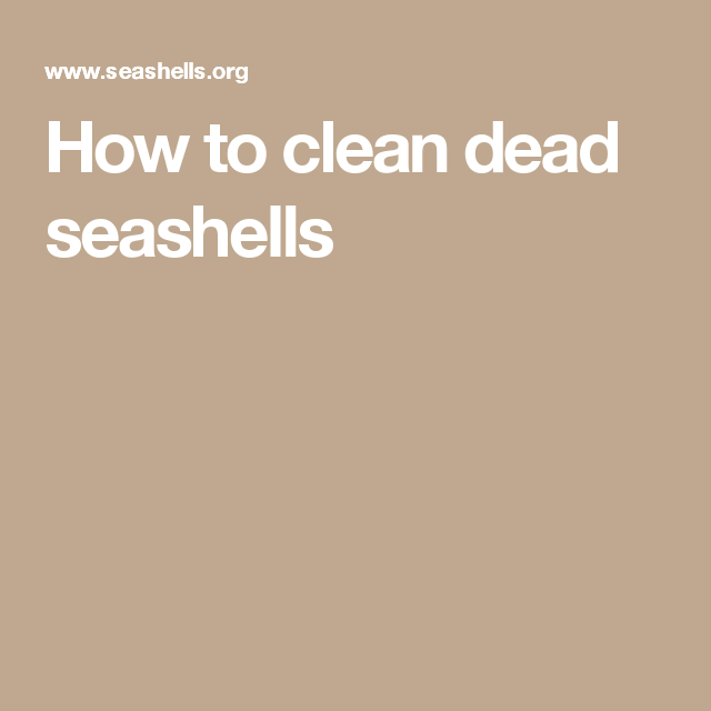 How to clean dead seashells