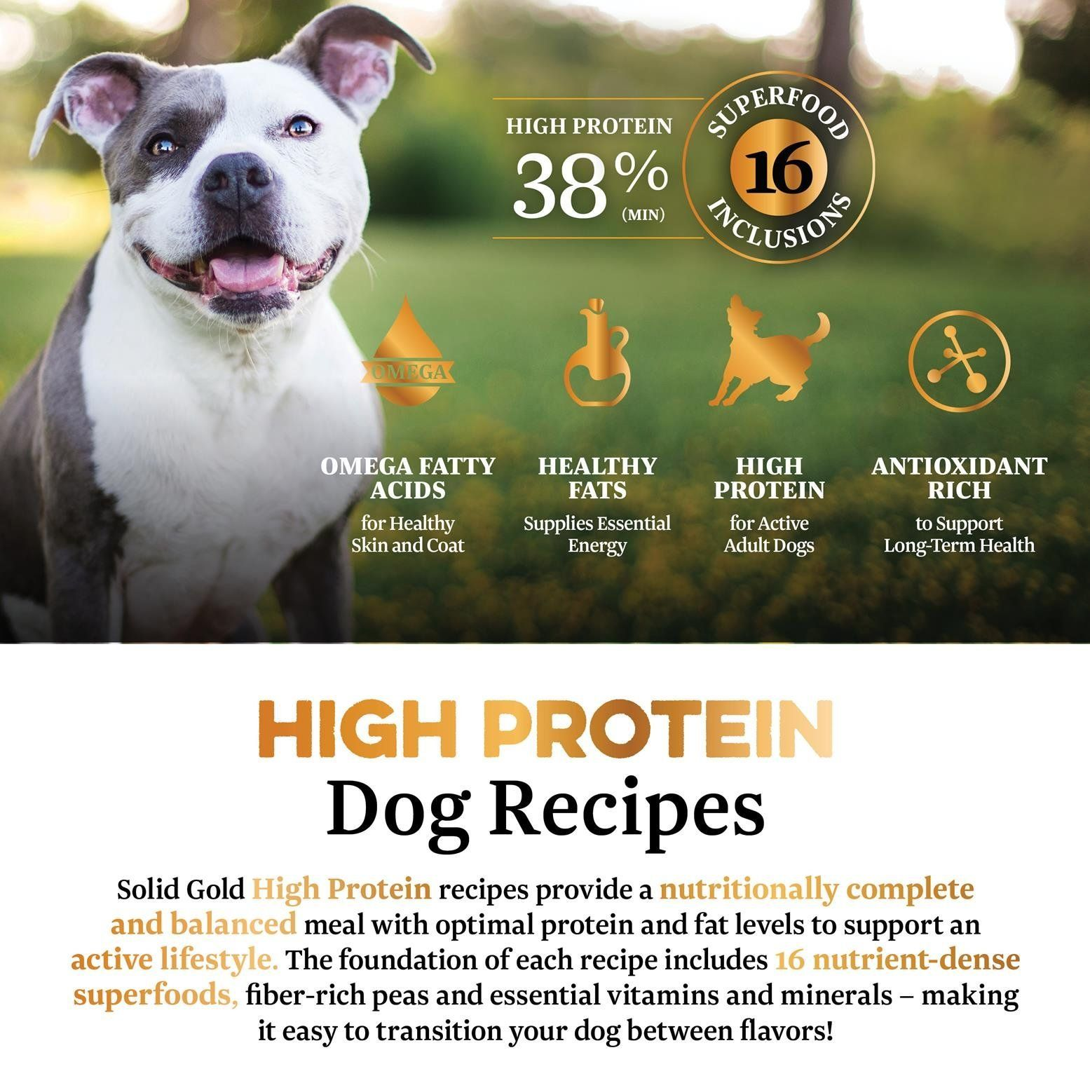 Solid Gold High Protein Dry Dog Food Grainfree With Real Salmon