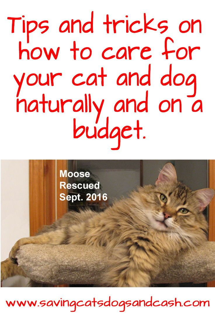 From Treating Infections To Kennel Cough I Share What I Ve Used To Quickly Heal My Cats And Dogs Without A Costly Trip To The Vet Dog Cat Saving Cat Cats