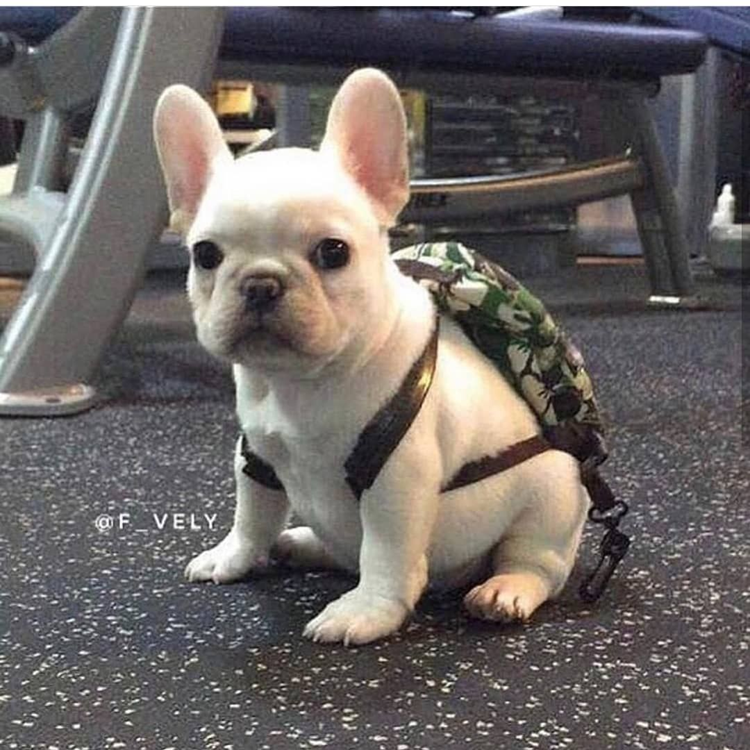 Get Ready For School F Vely Frogdog Frenchiepup Batpig