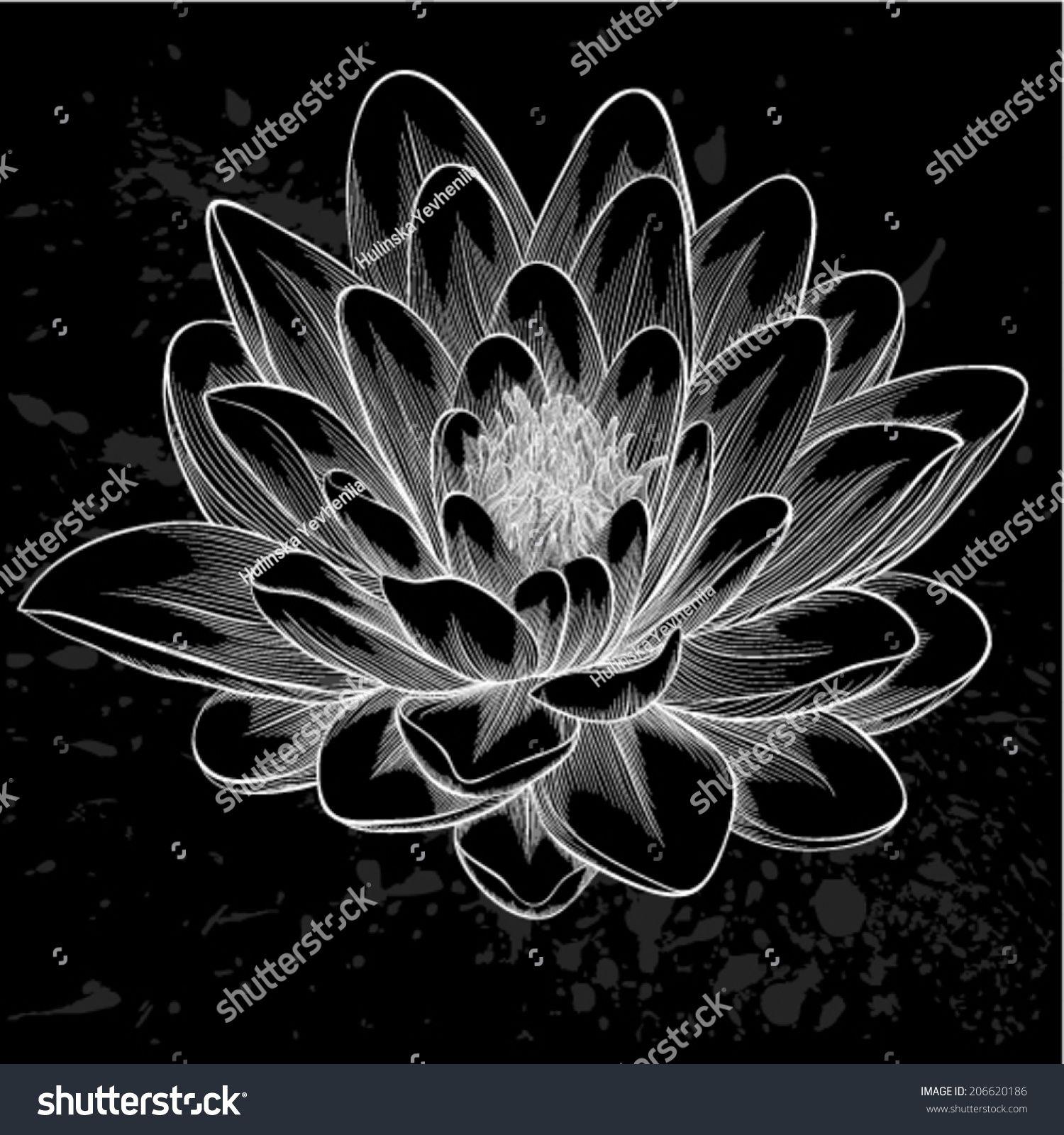 Beautiful monochrome black and white lotus flower painted in beautiful monochrome black and white lotus flower painted in graphic style isolated izmirmasajfo Images