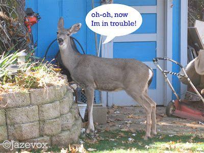 ARTICLE: Deer, Ohh Deer! #deers #yard #steal #plants #garden #funny #comedy VIEW original article at http://www.gardenersland.com/2007/11/deer-ohh-deer.html